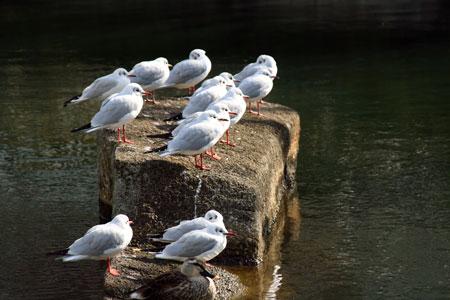横十間堀川親水公園