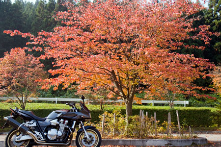 バイクと紅葉1