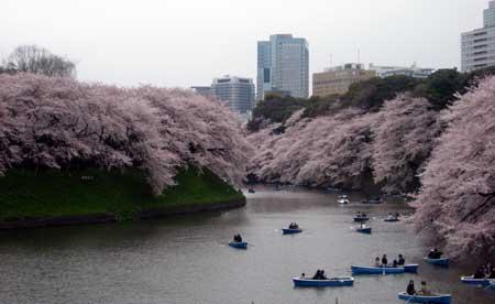 chidorigafucgi1.jpg