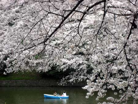 chidorigafuchi.jpg